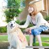 犬好きな女性や少女達と色んな種類のワンコ達の楽しい共同生活の様子を まとめました。