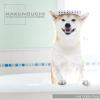 小型〜中型犬を中心にペットとして人気犬種のワンコ達を撮影しました。
